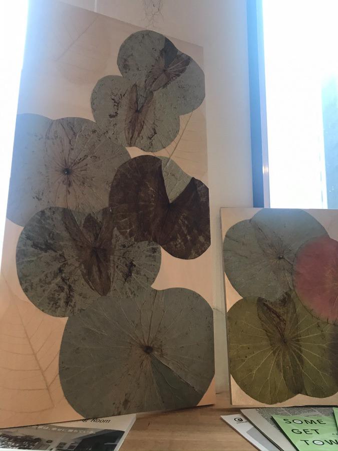 着色前の蓮の葉たち